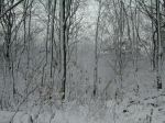 winter_woods
